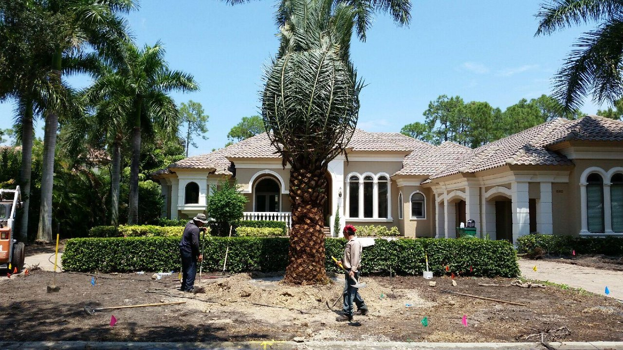 Image: Landscaping services at TLC Lawn in Naples, FL