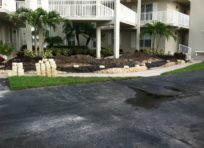 Image: Gallery Photo 1 | Completed Palm install | Landscaping services at TLC Lawn in Naples, FL